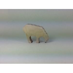 Mouton blanc qui broute